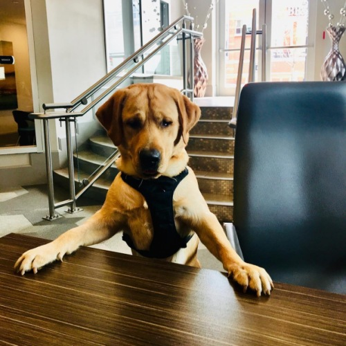 Our sweet fur-baby Henry wanted to help us lease some apartments today!! He wants all pet owners to know that #CircaUptown is #petfriendly with daily treats and a pet  wash station!  #petsofinstagram #petlove #charlottenc #queencity #uptowncharlotte #apartmentliving #cityliving